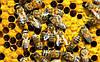 Купить пчел. Пчелопакеты Карпатки, пчелопакеты Карники
