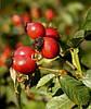 Шиповник  плоды 110гр