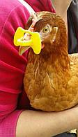 Очки для кур и фазанов ( шторки от канибализма)