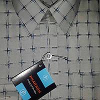 Детская рубашка PHARAOH (размеры 30,31,32,33,34,35,36)