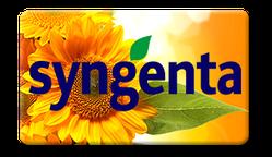 Семена подсолнуха Syngenta