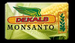 Семена кукурузы Монсанто