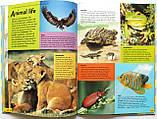Комплект дитячих енциклопедій англійською мовою «World Book» , фото 7
