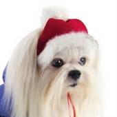 Шапки, кепки и банданы для собак