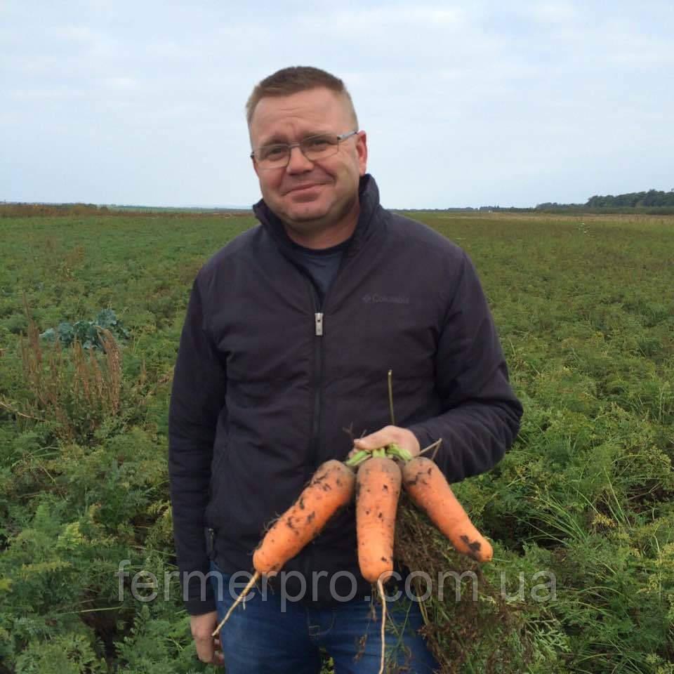 Семена моркови Абако F1(от 2,0 мм и более) Seminis 1 млн семян
