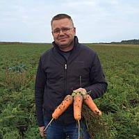 Семена моркови Абако F1(от 2,0 мм и более) Seminis 200000 семян