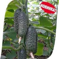 Семена Огурец-корнишон  СВ 3506 ЦВ,  ВИКОЛ
