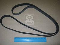 Ремень поликлиновой (Производство ContiTech) 6PK1795