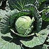 Семена капусты б/к Янисоль 20 сем. Садыба центр