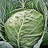 Семена капусты б/к Этма 20 сем. Садыба центр
