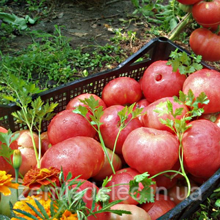Семена томата Корнеевский 30 сем. Элитный ряд