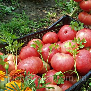 Семена томата Корнеевский 1 гр. Элитный ряд