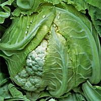 Семена цветной капусты Сантамария F1 10 сем. Садыба Центр