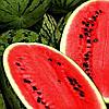 Семена арбуза Кримсон свит АУ Продюсер 5 кг. Коуел (Sais)