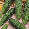 Семена огурца Пасамонте F1 10 сем. Садыба Центр