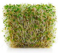 Семена люцерны, 0,5 кг