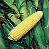 Семена кукурузы сахарной Оверленд F1 20 сем. Садыба Центр