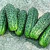 Семена огурца Делпина F1 10 сем. Садыба Центр