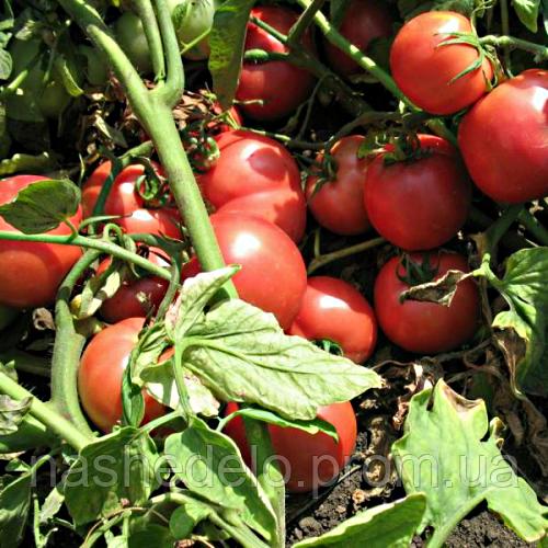 Семена томата Тарпан F1 10 сем. томат Садыба Центр