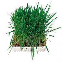 Трава для грызунов Trixie, 100 г пакет