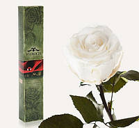 Долгосвежая роза Белый бриллиант 7 карат (на коротком стебле)