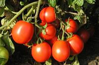 Семена томата Форсаж (Фриско) F1 (1000с) ранний сливка, фото 1