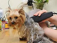Машинка для стрижки собак surker