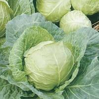 Семена капусты б/к Супер Казачок F1 0,5 гр. Nasko