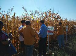 Новинки гибридов кукурузы кампании Aspria seeds в сезоне 2017 года.