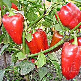 Семена перца сладкого Антей 40 сем. Nasko