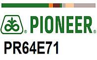 Гибрид подсолнечника Пионер ПР64Е71 (Pioneer PR64Е71) под гранстар, экспресс