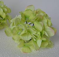 Головка гортензії салатова