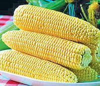 Кукуруза Спирит F1 сладкая 30 c (Syngenta) (перефасовано Vse-semena)
