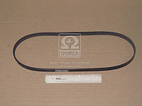 Ремень поликлиновой (Производство ContiTech) 6PK1084