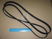 Ремень поликлиновой (Производство ContiTech) 6PK2415