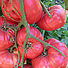 Семена томата Малиновое чудо F1 20 сем. Элитный ряд