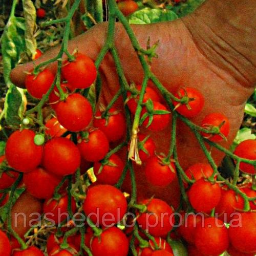 Семена томата Барбарис черри F1 20 сем. Элитный ряд