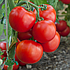 Семена томата Манин F1 1 гр. Элитный ряд