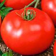 Семена томата Прима-люкс F1  1 гр.Элитный Ряд