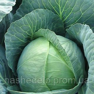 Семена капусты б/к Виват F1 0,5 гр. Nasko