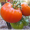 Семена томата Алтайский оранжевый 1 гр. Элитный ряд