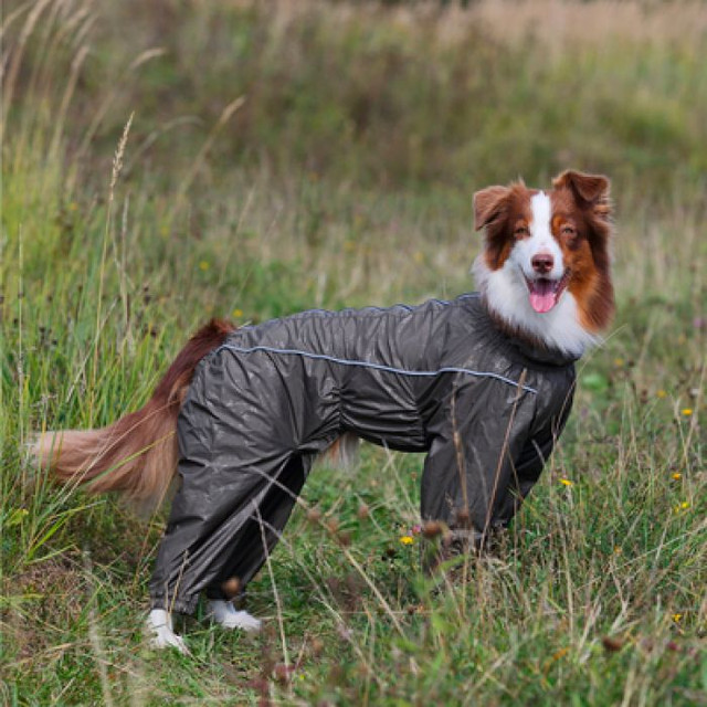 Комбинезоны для собак весна-осень