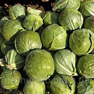 Семена капусты б/к Перлина F1 0,5 гр. Nasko