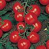 Семена томата Ричи F1 0,05 гр Садыба Центр