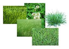 Отдельные культуры газонных трав, декоративных культур и декоративно - цветочная смесь