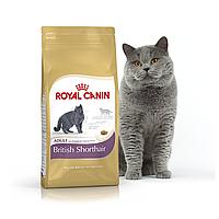 Корм для Британцев короткошерстных от 1 года Royal Canin British Shorthair 4 кг