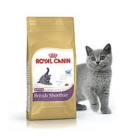 Royal Canin Kitten British Shorthair 2 кг - Корм для Британцев короткошерстных котят от 4 мес. до 1 года