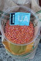 """Семена кукурузы """" Шаланда 350 """""""