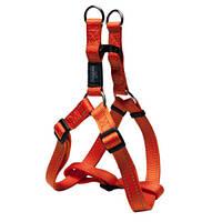 Шлея степ для собак утилитарность, оранжевый, ROGZ S, 27-38 см