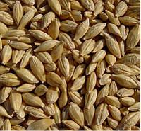 Предлагаем семена канадского ярового ячменя - сорт «Дункан», 1 репродукция  напрямую от семенного завода.